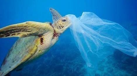 ผลกระทบต่อการใช้ถุงพลาสติก 04